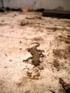 071202_gecko